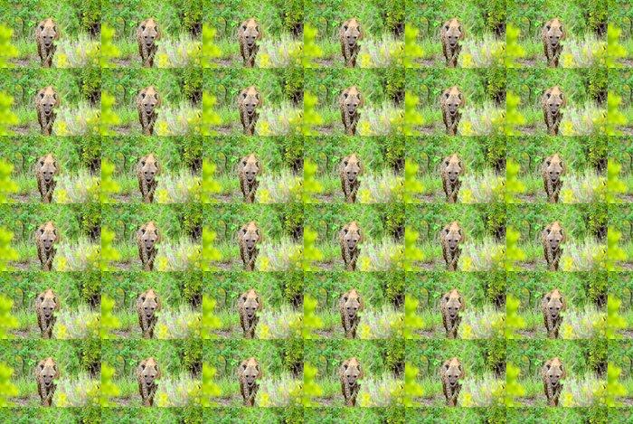 Vinylová Tapeta Hyena - Savci