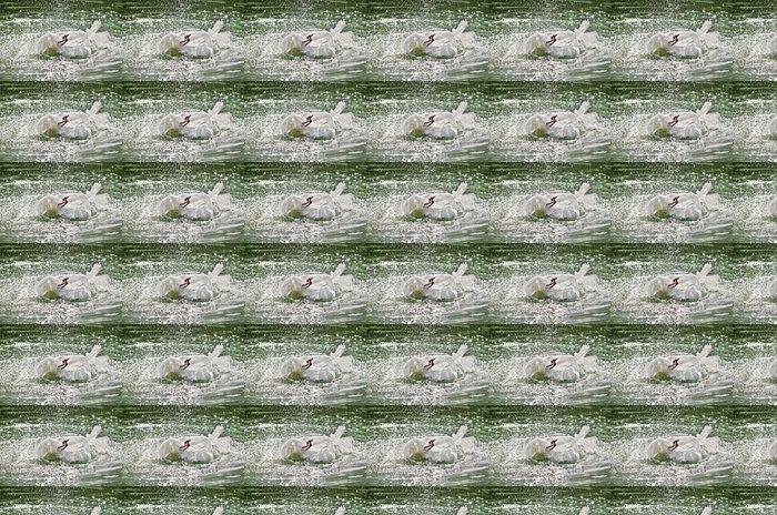 Vinylová Tapeta Белый лебедь машет крыльями в воде. Летят брызги - Ptáci