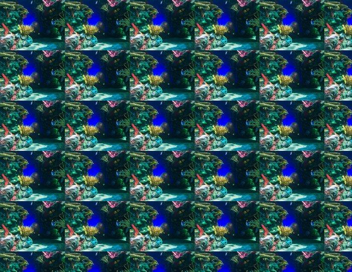 Vinylová Tapeta Scény z korálového útesu - Vodní a mořský život