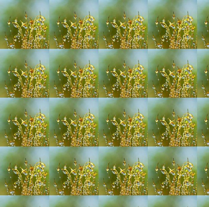 Vinylová Tapeta Detailní mech v lese po dešti - Rostliny