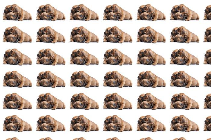 Vinylová Tapeta Tři šťastné psi na bílém pozadí izolované - Criteo