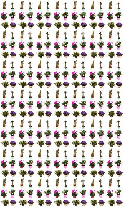 Vinylová Tapeta Sada pokojová rostlina v květináči. Izolovaných na bílém - Rostliny