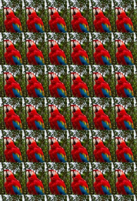 Vinylová Tapeta Červené a modré papoušek - Ptáci