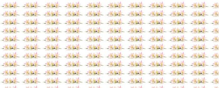 Vinylová Tapeta Krásné květy lilie, izolovaných na bílém - Květiny
