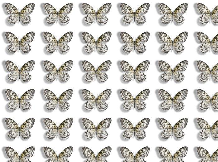 Vinylová Tapeta Motýl izolovaných na bílém - Ostatní Ostatní