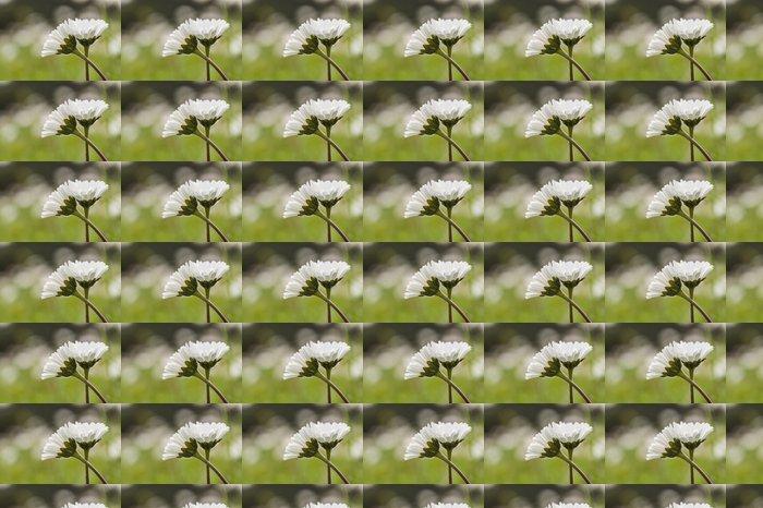 Vinylová Tapeta Daisy květiny na zelené trávě - Roční období