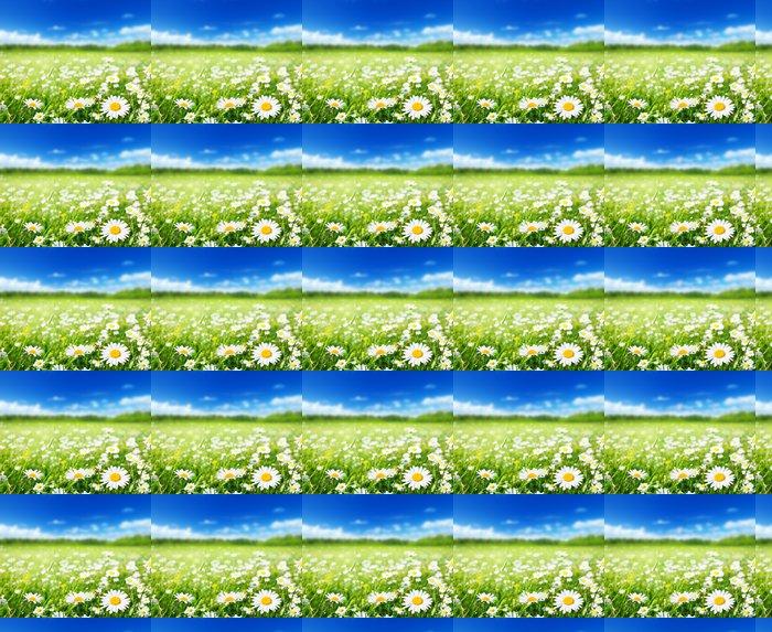 Vinylová Tapeta Pole květy sedmikrásky - Roční období
