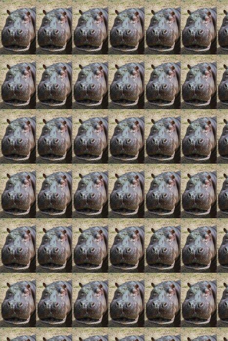 Vinylová Tapeta Hippopotamus- Hippopotamus amphibius - Savci
