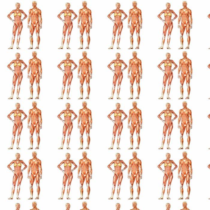 Tapete Menschlicher Körper-Anatomie - männlich und weiblich • Pixers ...