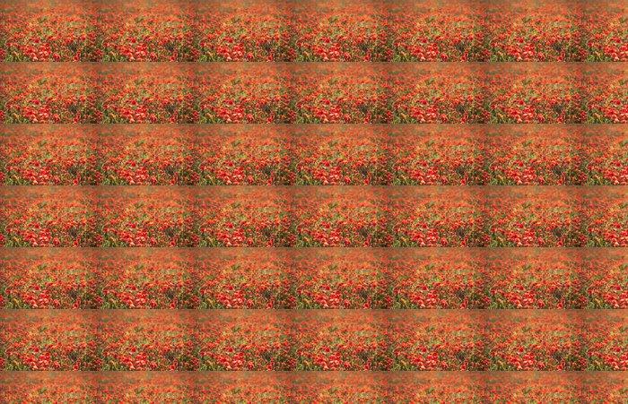 Vinylová Tapeta Detailní záběr na protisvětle máky - Roční období