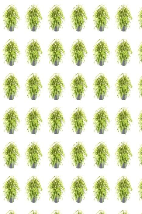Vinylová Tapeta Ficus strom - Stromy