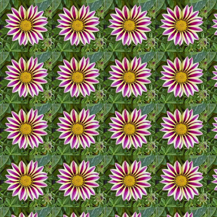 Vinylová Tapeta Bledá a fialové barevné tygr gazania květina - Květiny