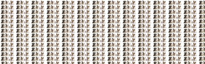 Vinylová Tapeta Close-up ze skupiny psů, izolovaných na bílém - Savci