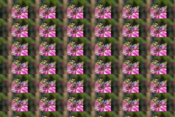 Vinylová Tapeta Pink Passiflora flower - Květiny