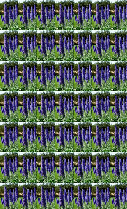 Vinylová Tapeta Echium candicans v plném květu, květ detail - Květiny