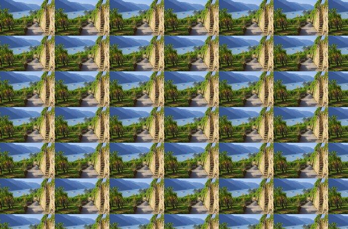 Vinylová Tapeta Wachau Weinberg - Wachau vinice 15 - Témata
