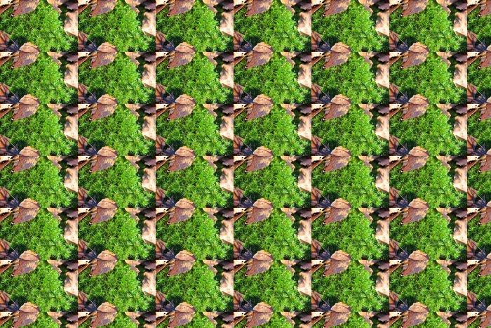Vinylová Tapeta Green Moss - Struktury