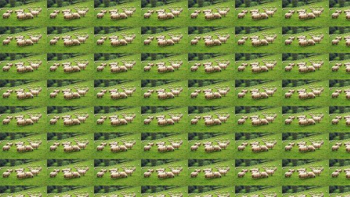 Vinylová Tapeta Stádo ovcí - Témata