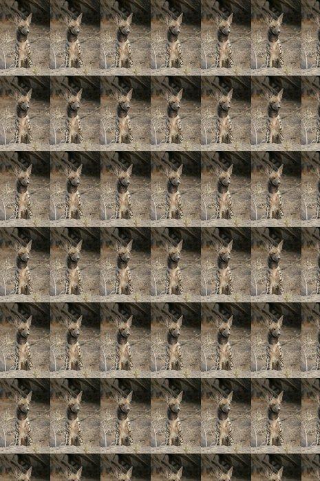 Vinylová Tapeta Zřídka viděn hyena žíhaná - Afrika