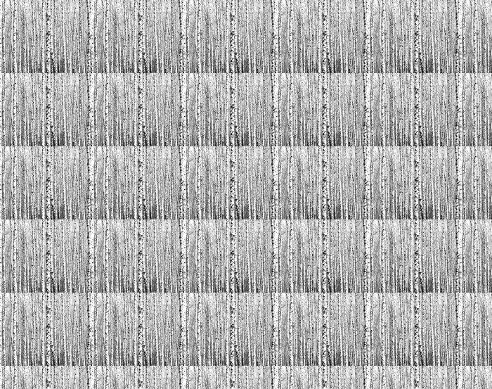 Vinylová Tapeta Jarní kmeny břízy černé a bílé - Styly