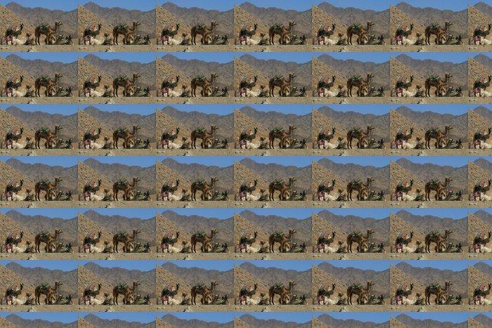 Vinylová Tapeta Velbloudi osedlaní v Sinajské poušti - Savci