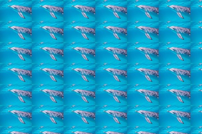 Vinylová Tapeta Plavat s delfíny - Témata