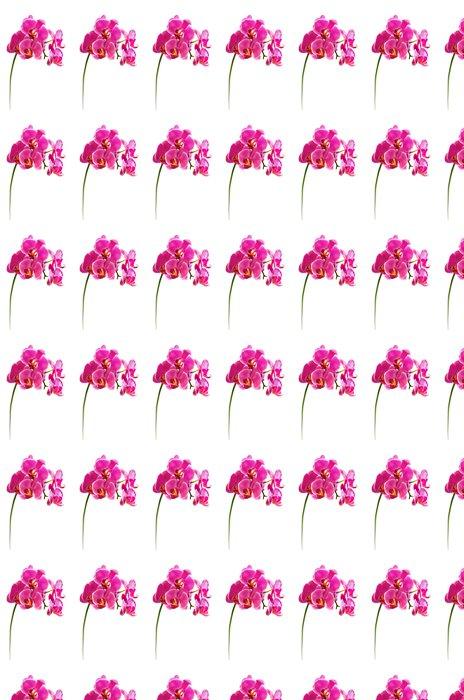 Vinylová Tapeta Krásná květina orchidej - Nálepka na stěny