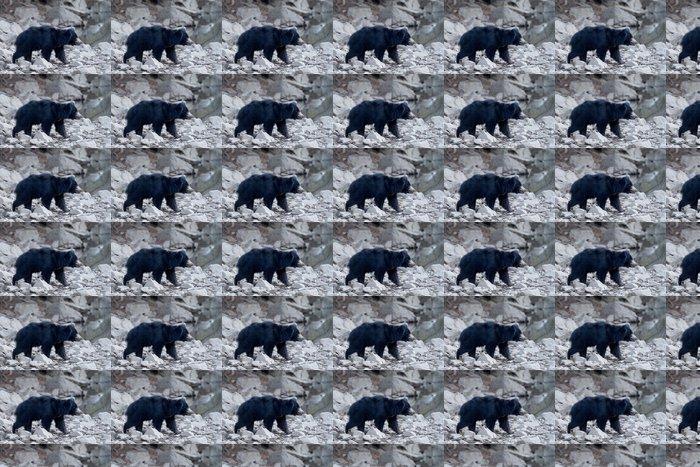 Vinylová Tapeta Lenost medvěd chůzi v křoví. - Savci
