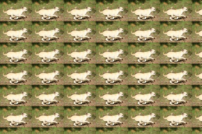 Vinylová Tapeta Samozřejmě du Chihuahua béžová de profil - Savci
