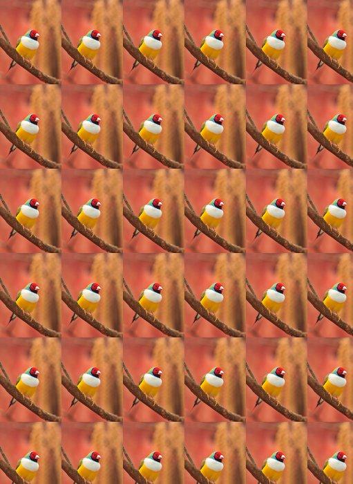 Vinylová Tapeta Gouldian Finch barevné pták - Témata