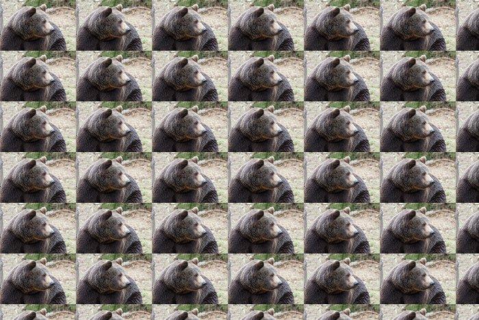 Vinylová Tapeta Portrét mužské medvěda hnědého - Témata