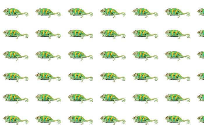 Vinylová Tapeta Jeden Jemen chameleon - Ostatní Ostatní