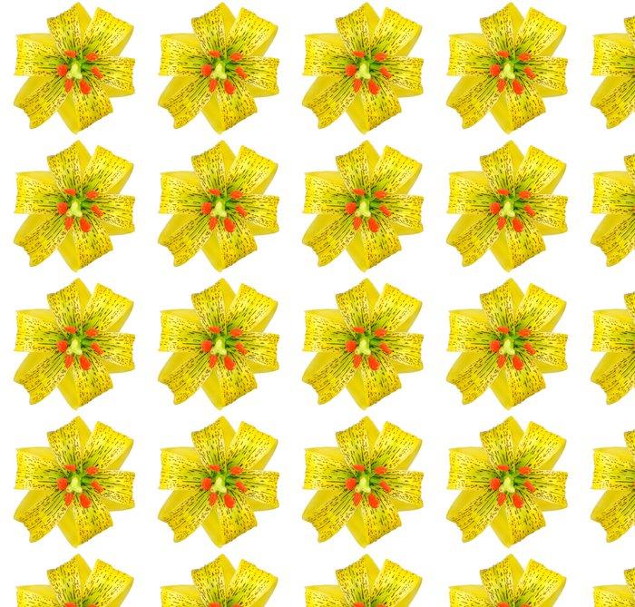 Vinylová Tapeta Žlutá asijské lily s černými skvrnami izolovaných na bílém - Květiny