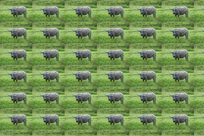 Vinylová Tapeta Buffalo, Sumatra, Indonésie - Asie