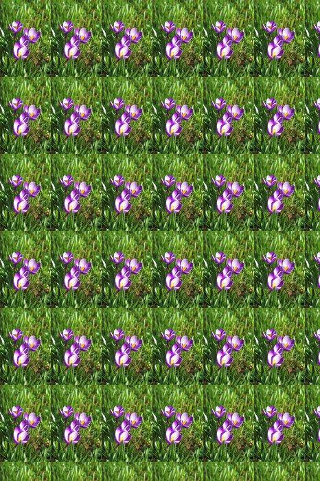 Vinyltapete Krokusse - Blumen