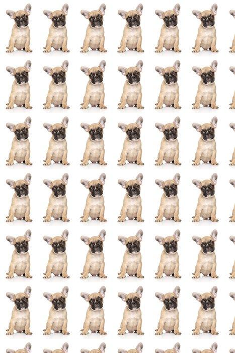 Vinylová Tapeta Francouzský buldoček štěně portrét - Savci
