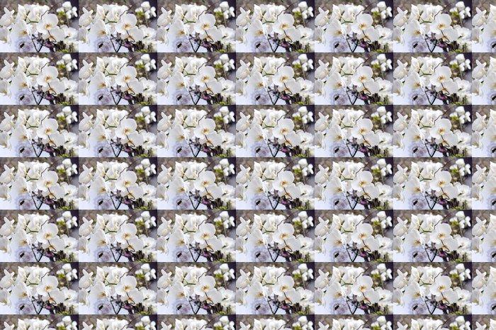 Vinylová Tapeta Bílá orchidej - Slavnosti