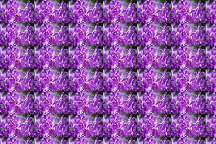 Vinylová Tapeta Barevné květy orchidejí na světlé letní den - Květiny