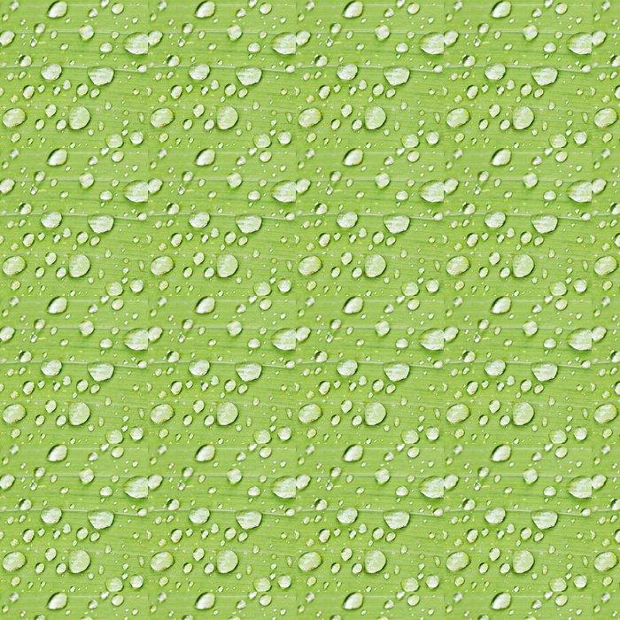 Vinylová Tapeta Kapky deště na zelené stéblo duhovky zblízka - Rostliny