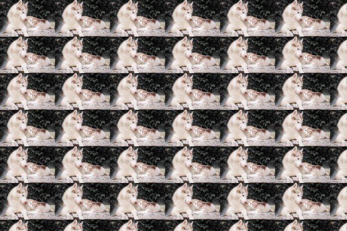 Vinylová Tapeta Framsook - Psi