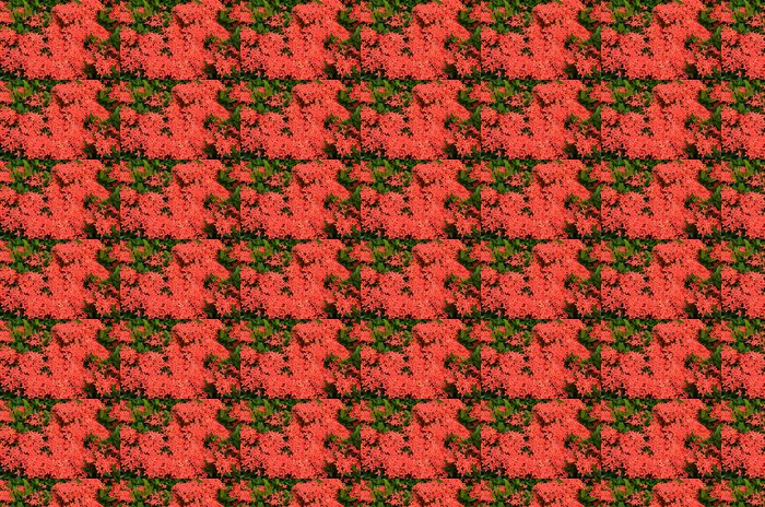 Vinylová Tapeta Kytice Ixora květu, West Indian Jasmine, Ixora chinensis La - Rostliny