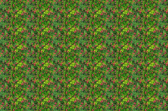 Vinylová Tapeta Zelené listy a malý červený květ pozadí - Květiny