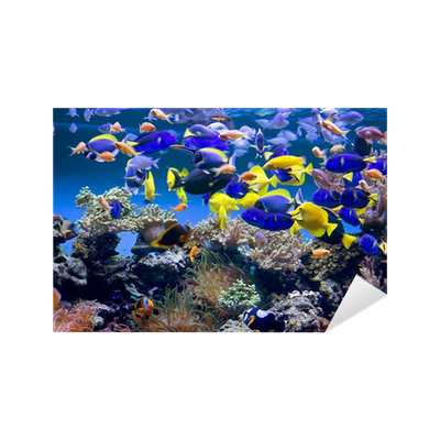 aufkleber aquarium mit fischen pixers wir leben um. Black Bedroom Furniture Sets. Home Design Ideas