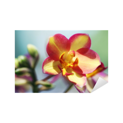 Aufkleber sch ne boden orchideenbl te pixers wir for Boden aktionscode