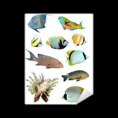 Aufkleber tropische fische isoliert auf wei pixers wir leben um zu ver ndern - Fliesenaufkleber fische ...