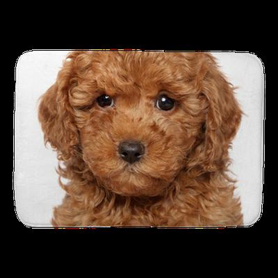 Poodle Puppy Close Up Portrait Bath Mat Pixers We Live To Change
