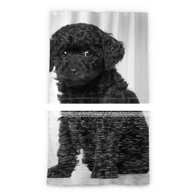 Toy Poodle Puppy Blackout Window Curtain Pixers We Live To Change