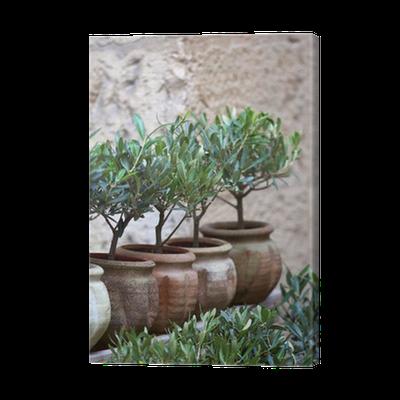 Boom In Pot Tuin.Canvas Olijfolie Plant Middellandse Zee Ten Zuiden Boom Tuin Pot Pixers We Leven Om Te Veranderen