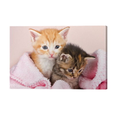 baby kittens wrapped in a pink blanket canvas print