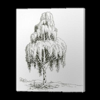 Birch Tree Sketch Vector Canvas Print Pixers We Live To Change